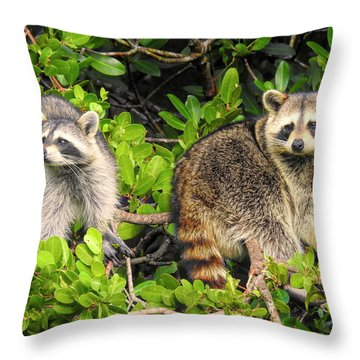 Raccoons In The Mangroves Throw Pillow