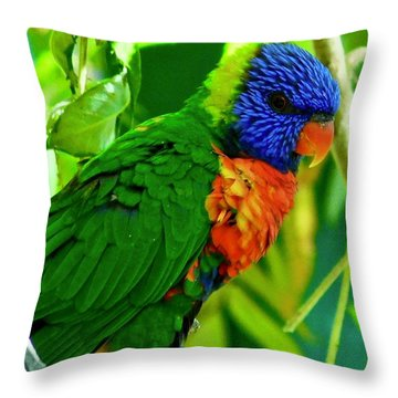 Throw Pillow featuring the photograph Rainbow Lorikeet by Dan Miller