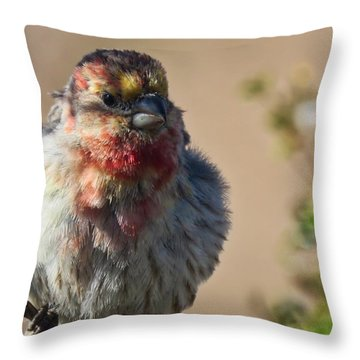Rare Multicolored Male House Finch Throw Pillow