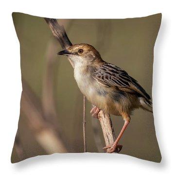 Rattling Cisticola Throw Pillow