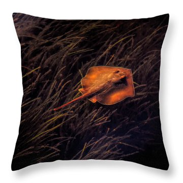 Ray In The Grass Flats Throw Pillow