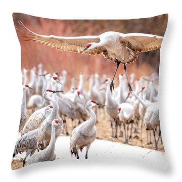 Ready Or Not, Here I Come -- Sandhill Cranes Throw Pillow