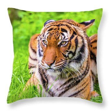 Throw Pillow featuring the photograph Ready To Pounce by Dheeraj Mutha