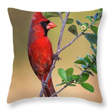 Red All Over Throw Pillow