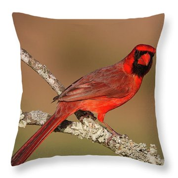 Red And Radiant Throw Pillow