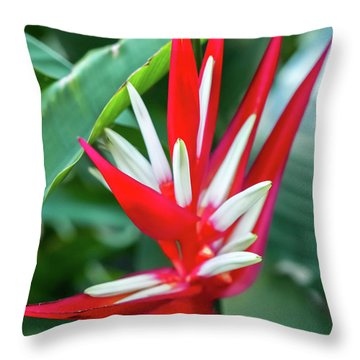 Red And White Birds Of Paradise Throw Pillow