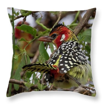 Red-and-yellow Barbet Throw Pillow