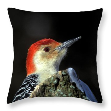 Throw Pillow featuring the photograph Red Bellied Woodpecker by Jeff Phillippi