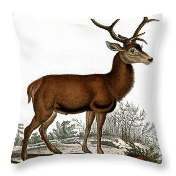 Red Deer Circa 19th Century Colored Engraving Throw Pillow