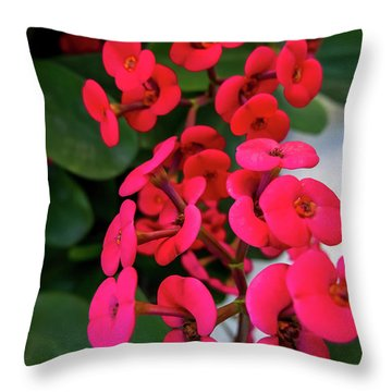 Red Flowers In Bloom Throw Pillow