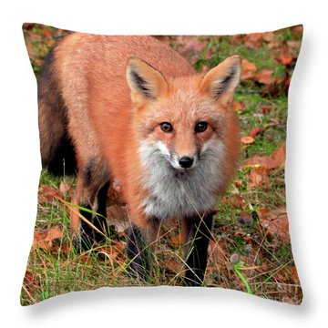 Throw Pillow featuring the photograph Red Fox by Debbie Stahre