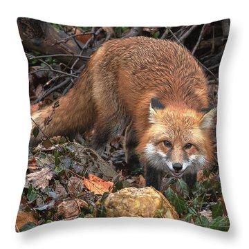 Throw Pillow featuring the photograph Red Fox Dmam0049 by Gerry Gantt