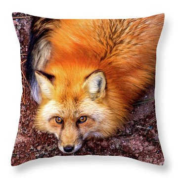 Red Fox In Canyon, Arizona Throw Pillow