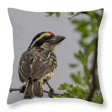 Red-fronted Barbet Throw Pillow