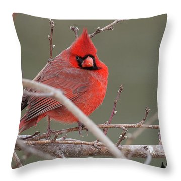 Red In Winter Throw Pillow