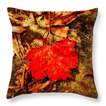 Red Leaf On Mossy Rock Throw Pillow