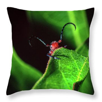 Throw Pillow featuring the photograph Red Milkweed Beetle by Jeff Phillippi