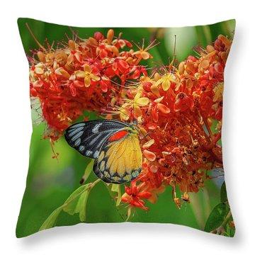 Throw Pillow featuring the photograph Red-spot Jezebel Butterfly Dthn0235 by Gerry Gantt