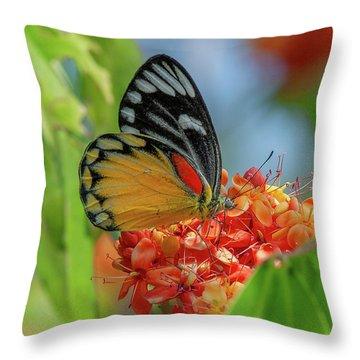Throw Pillow featuring the photograph Red-spot Jezebel Butterfly Dthn0237 by Gerry Gantt