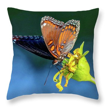 Red-spotted Purple Butterfly Throw Pillow