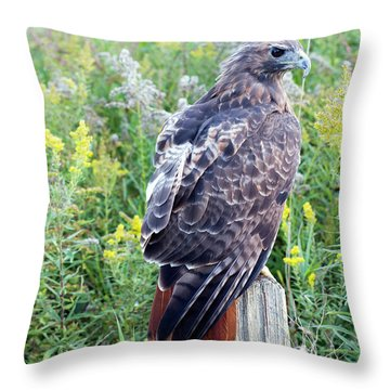 Red-tailed Hawk On Fence Post Throw Pillow