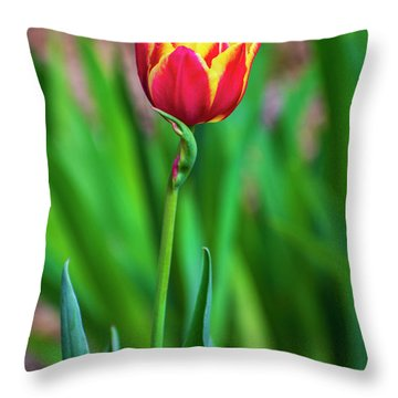 Red Tulip Flower Throw Pillow