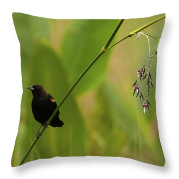 Red-winged Blackbird On Alligator Flag Throw Pillow