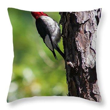 Redhead Woodpecker II Throw Pillow