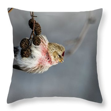 Redpoll Hanging On The Alder Twig Searching For Seed In The Cone Throw Pillow