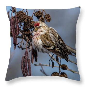 Redpoll Perching On The Alder Twig Searching For Seed In The Con Throw Pillow