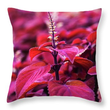 Throw Pillow featuring the photograph Reds by Dheeraj Mutha