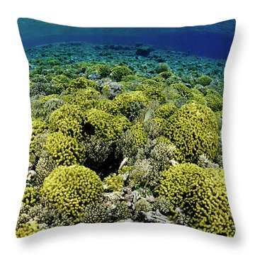 Kimbe Bay Throw Pillows