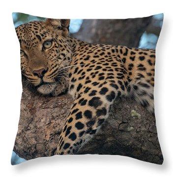 Relaxed Leopard Throw Pillow