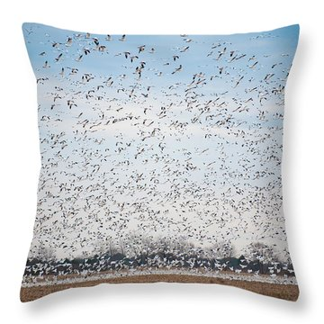 Resting On The Flyway Throw Pillow
