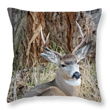 Resting Two-point Throw Pillow