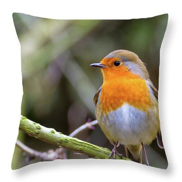 Robin. On Guard Throw Pillow
