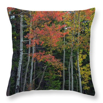 Throw Pillow featuring the photograph Rocky Mountain Forest Reds by James BO Insogna