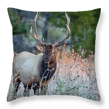 Rocky Mountain Wildlife Bull Elk Sunrise Throw Pillow