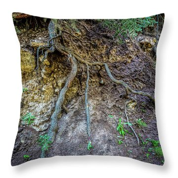 Throw Pillow featuring the photograph Root System by Jon Burch Photography