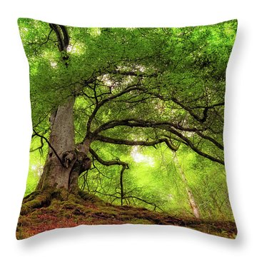 Roots Of Taymouth Estate - Scotland - Beech Tree Throw Pillow
