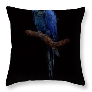 Royal Blue Beauty  Throw Pillow