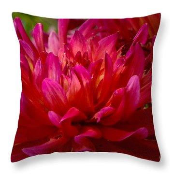 Ruby Red Dahlia Throw Pillow