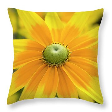 Throw Pillow featuring the photograph Rudbeckia Prairie Sun Flower by Tim Gainey