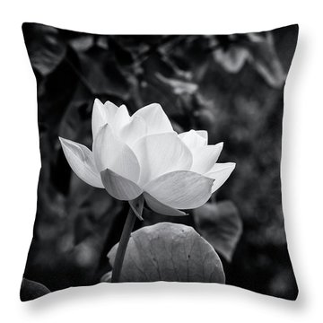 Throw Pillow featuring the photograph Sacred Lotus Monochrome by Tim Gainey