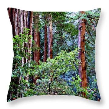 Samuel Taylor Redwoods 1 Throw Pillow