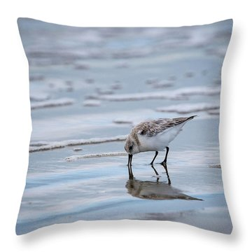Throw Pillow featuring the photograph Sanderling Foraging by Jeff Phillippi