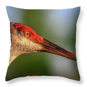 Throw Pillow featuring the photograph Sandhill Sunlight Portrait by Tom Claud