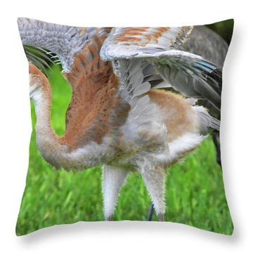 Sandy Crane Shows New Feathers Throw Pillow