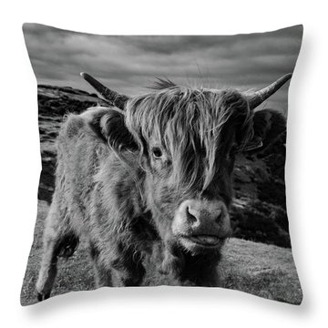 Saying Hello To A Highland Cow At Baslow Edge Black And White Throw Pillow
