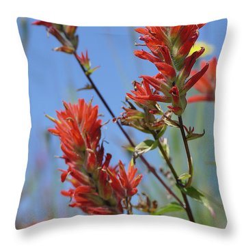 Scarlet Indian Paintbrush At Mount St. Helens National Volcanic  Throw Pillow